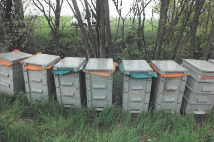 Méhkaptárakat lopott apa és fia