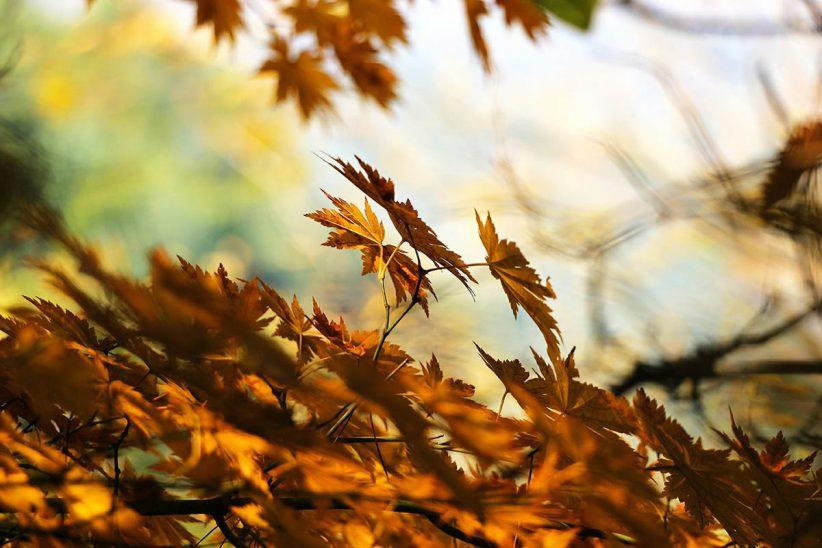 ősz, lehűlés, napos, vasárnap