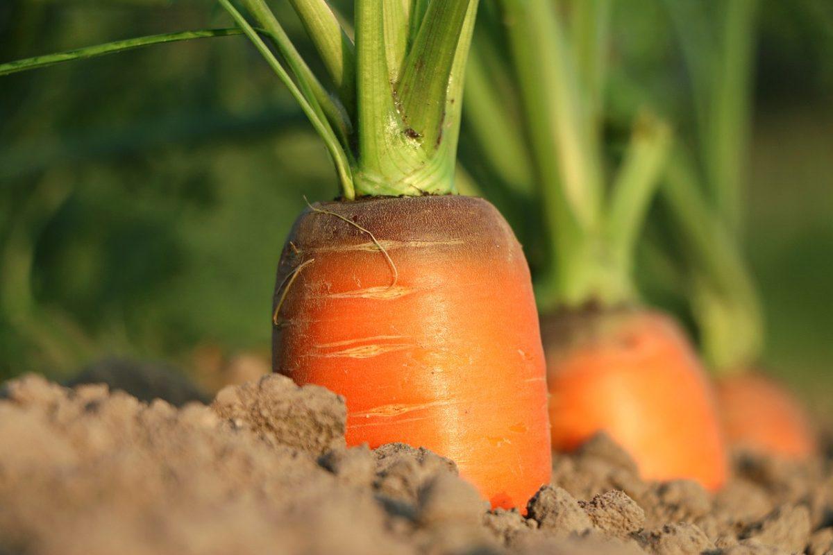 Emelkedtek a mezőgazdasági termelői árak tavalyhoz képest