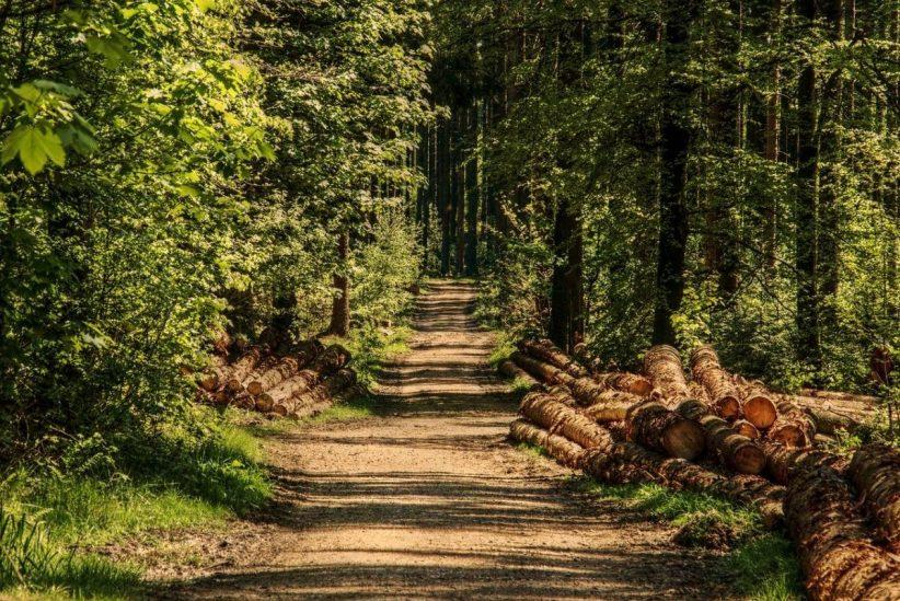 erdő, erdőgazdálkodók, facsemetét, erdőtelepítések, Országfásítási