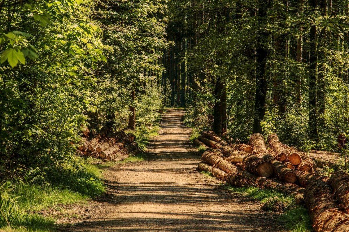 Az erdőgazdálkodók számára is segítséget jelentenek az intézkedések