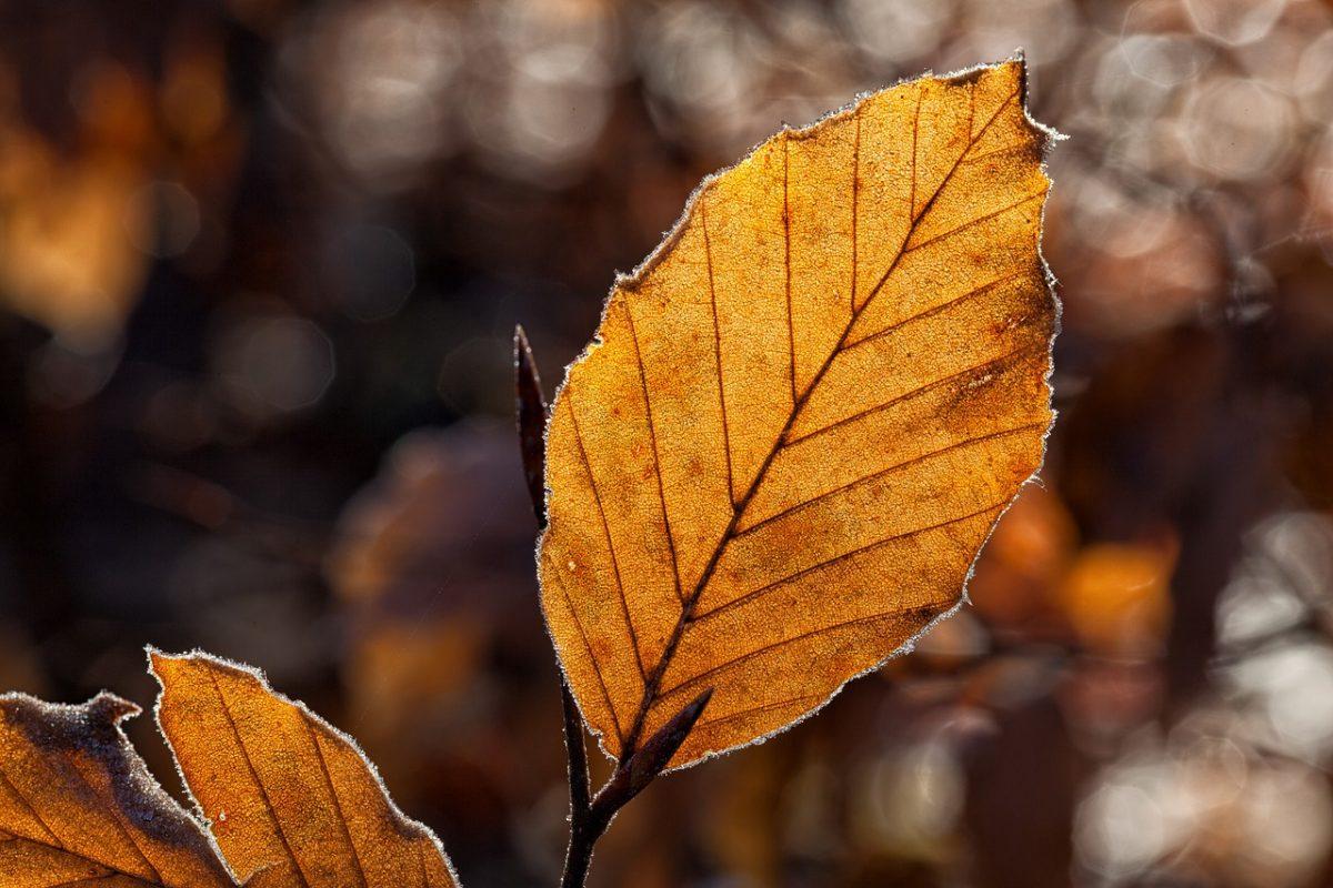 Marad az enyhe novemberi idő