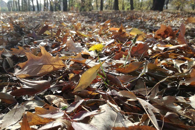 ősz, időjárás, Hétvégén