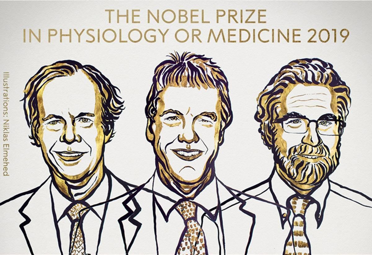 Az orvosi Nobel-díjjal egy alapfelfedezést ismertek el