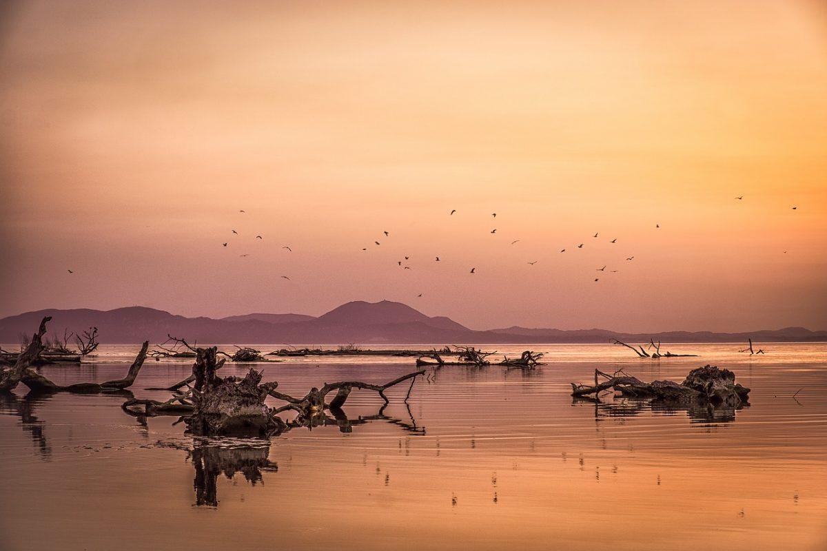 Az énekesmadarak tengeri átkelését vizsgálják magyar kutatók