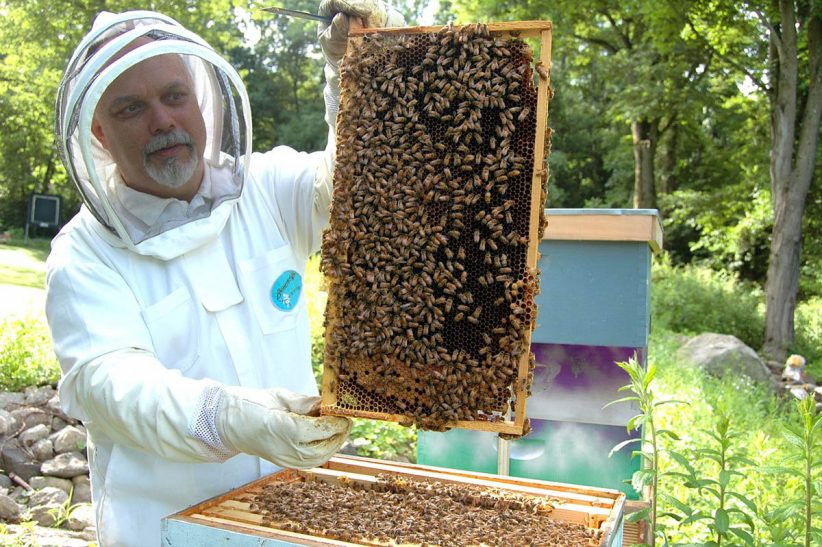 méhész, méhészet, méz