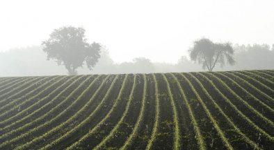 vetés, földművelés, gazdaság