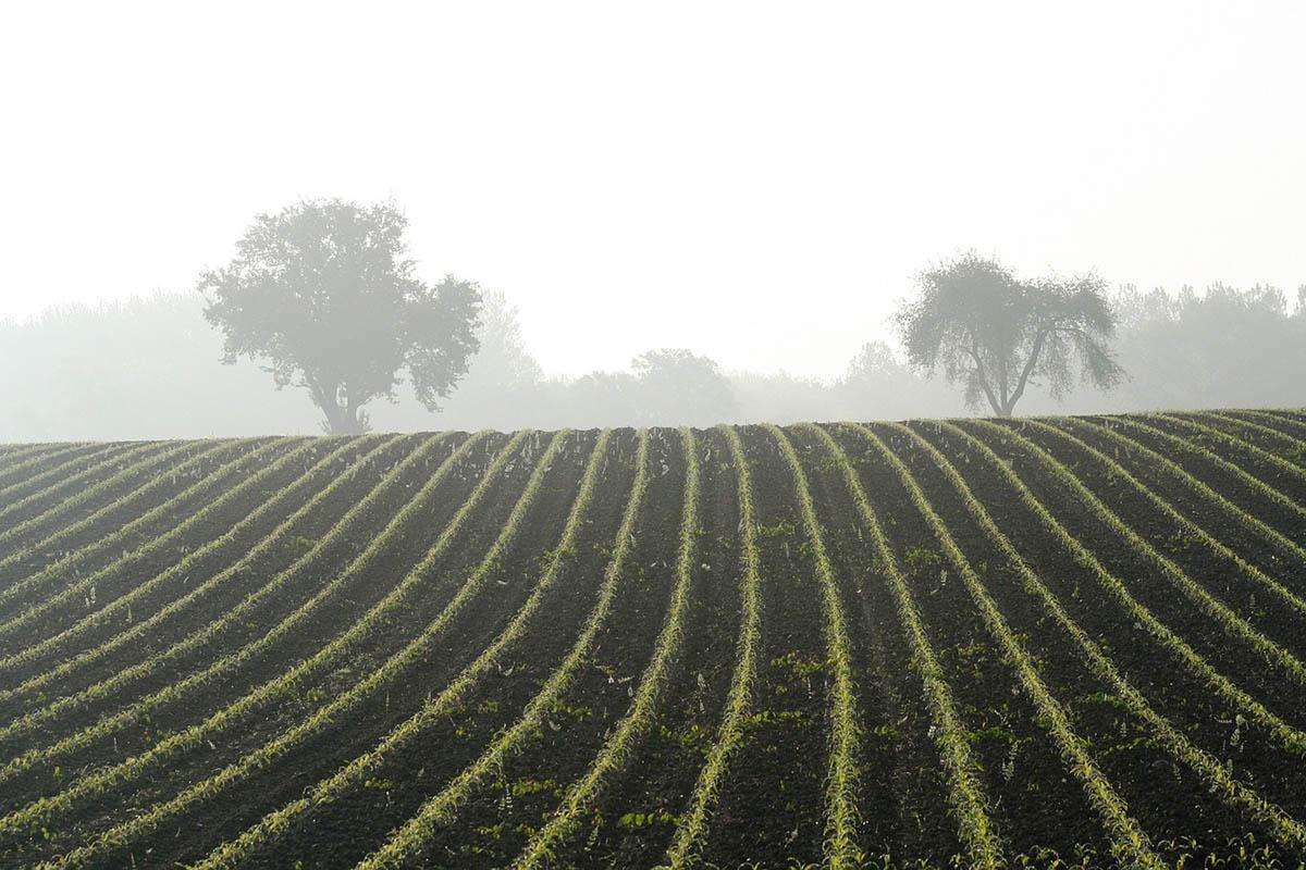 Az új növényegészségügyi szabályozás miatt változik a vállalkozók nyilvántartási kötelezettsége