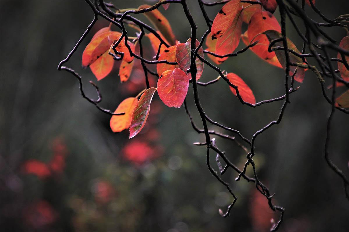 időjárás, ősz, borongós, 20