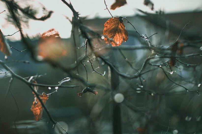 eső, időjárás, ősz, tél