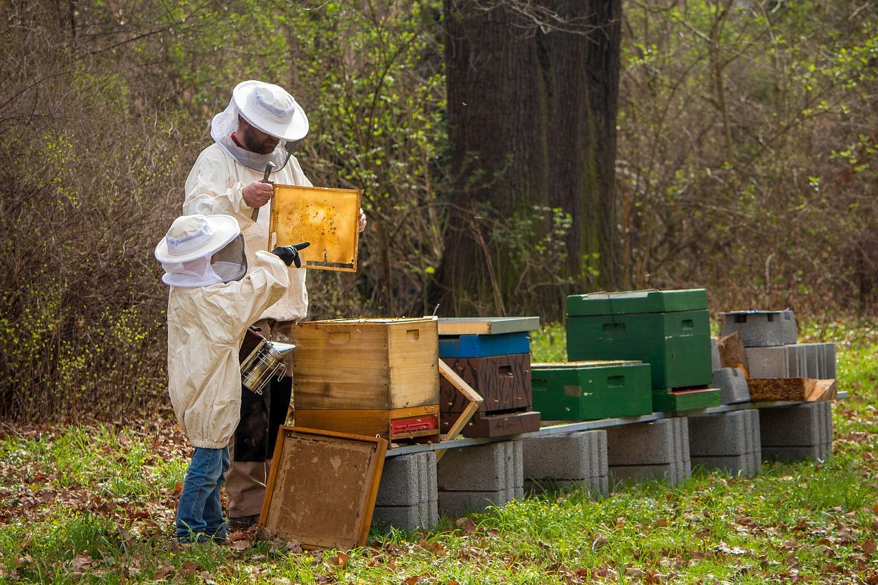 A méhészek legnagyobb kihívása a méhcsaládok életben tartása