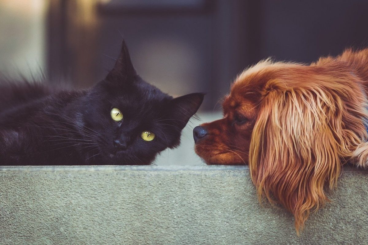 Kereskedelmi korlátozás: átmenetileg tilos kutyát és macskát vinni Olaszországba