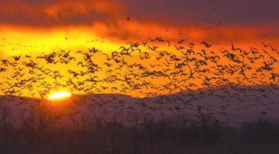 madár, klímaváltozás