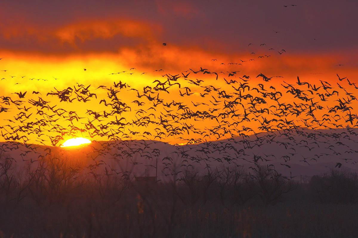 Megdöbbentő, ahogy a madarak reagálnak a klímaváltozásra
