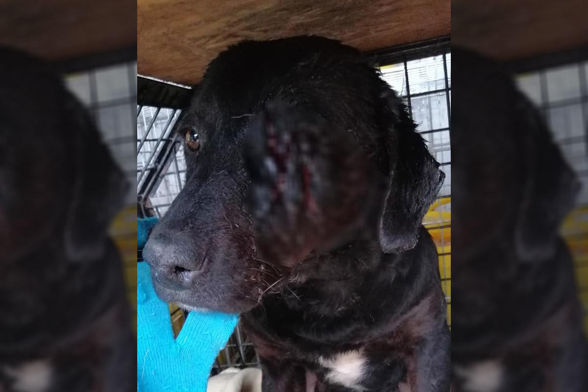 Baltával vágtak fejen egy kutyát Sarkadon