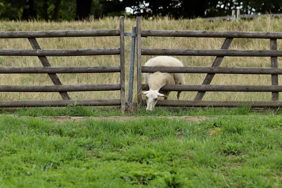 Juh- és kecskehús, valamint tejtermékek fogyasztását ösztönző kampányt indít a kormány