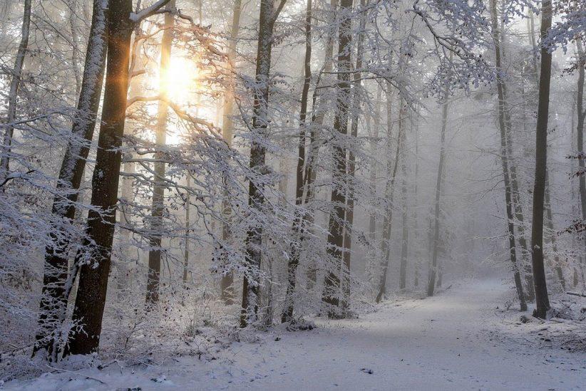 hószállingózás, hó, tél, időjárás, erdő, hétfő
