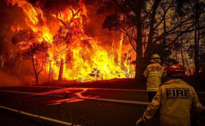 Több állatfajnak is bizonytalan a jövője a bozóttüzek miatt Ausztráliában