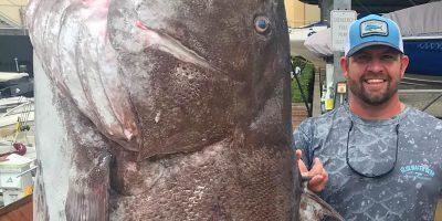 óriás hal, sügér, halászat, horgász