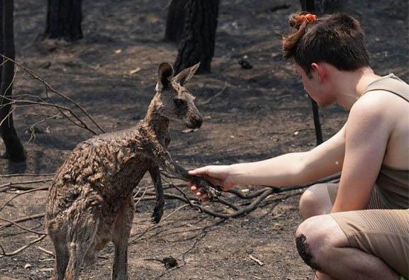 Szívszorító: Egy fiútól kért segítséget az ausztráliai bozóttűzben megsérült kenguru