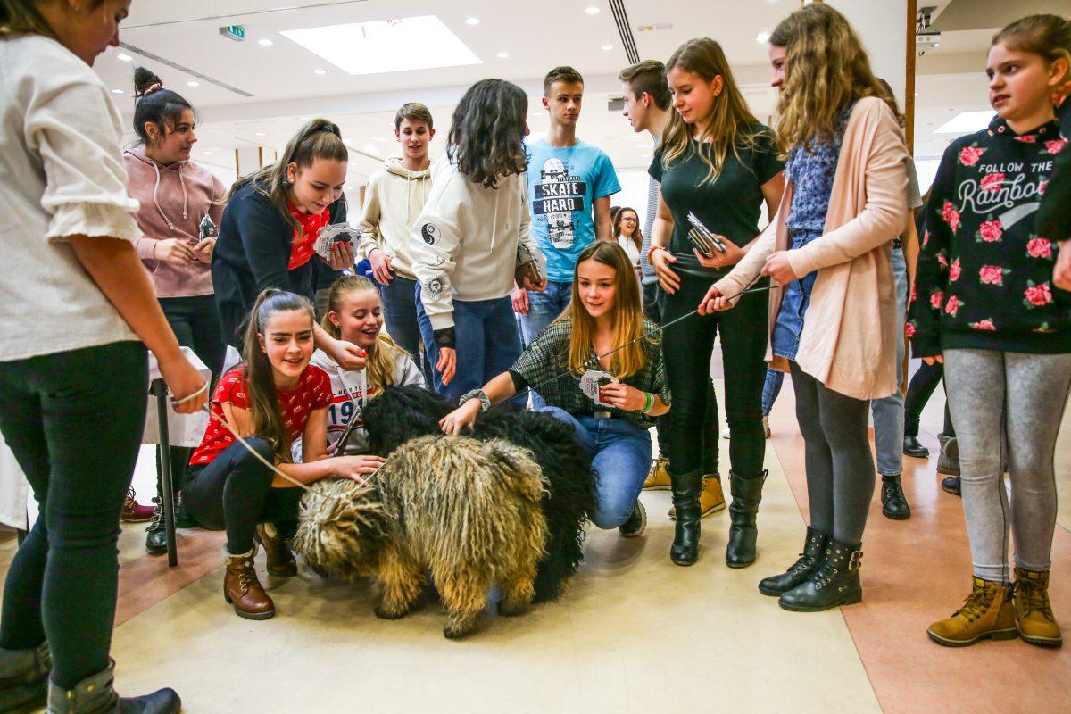 Ismeretterjesztő film készült az őshonos magyar kutyafajtákról