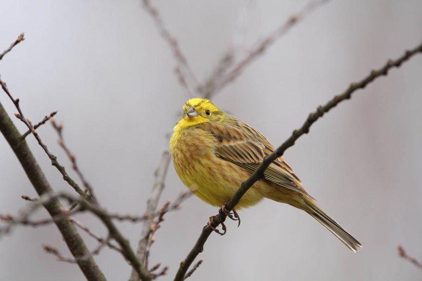 énekesmadár, madár