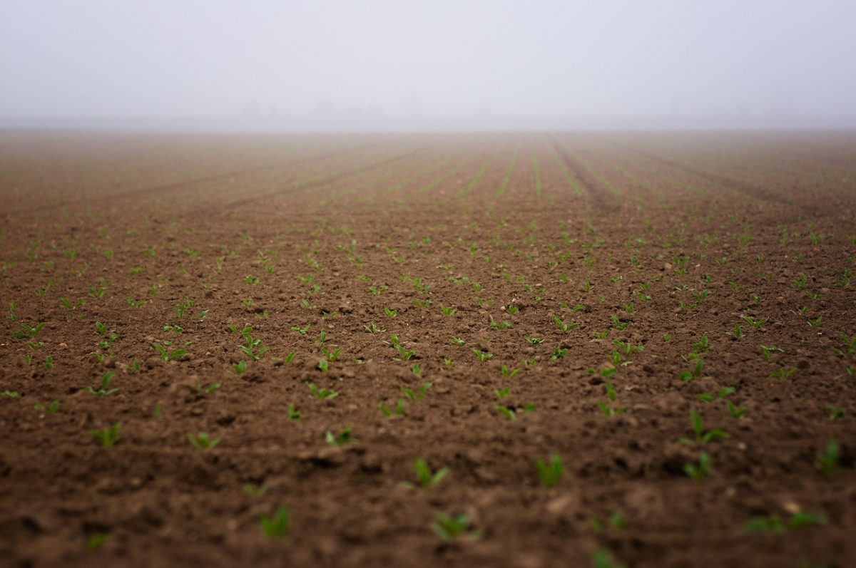 Tájékoztató jelentés az őszi mezőgazdasági munkák állásáról