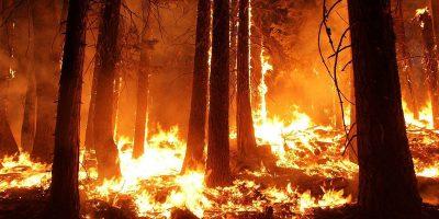 tűzgyújtási, bozóttüzek, wildfire, tűz, erdőtűz, ausztrália