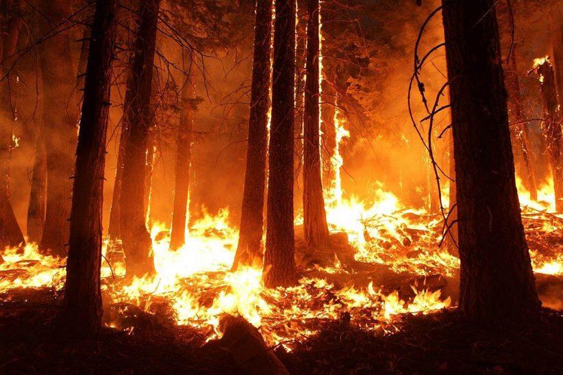 bozóttüzek, wildfire, tűz, erdőtűz, ausztrália
