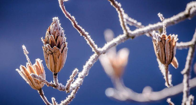téliesre, hideg, tél, időjárás