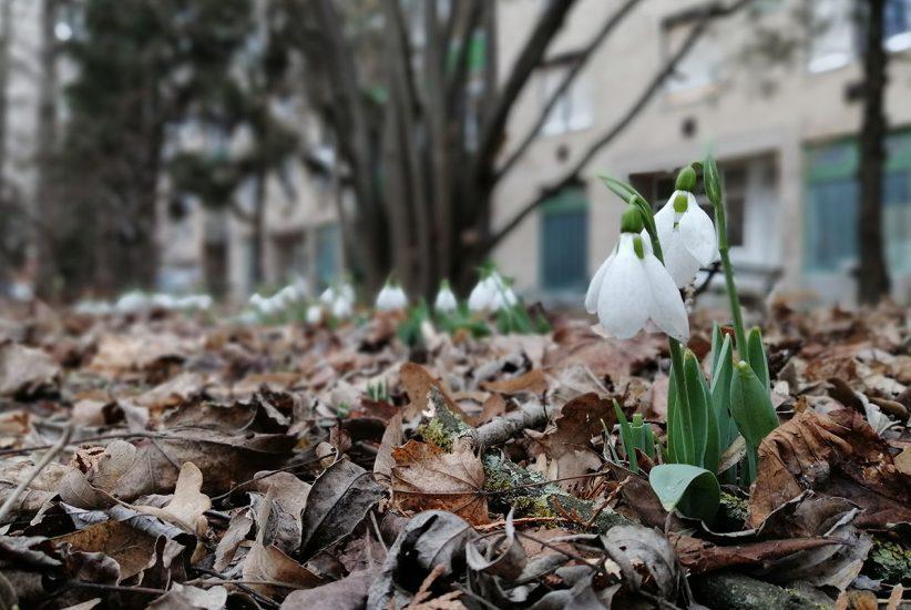 hóvirág, tavasz, enyhe tél