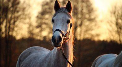 ló, lovak, lovassport