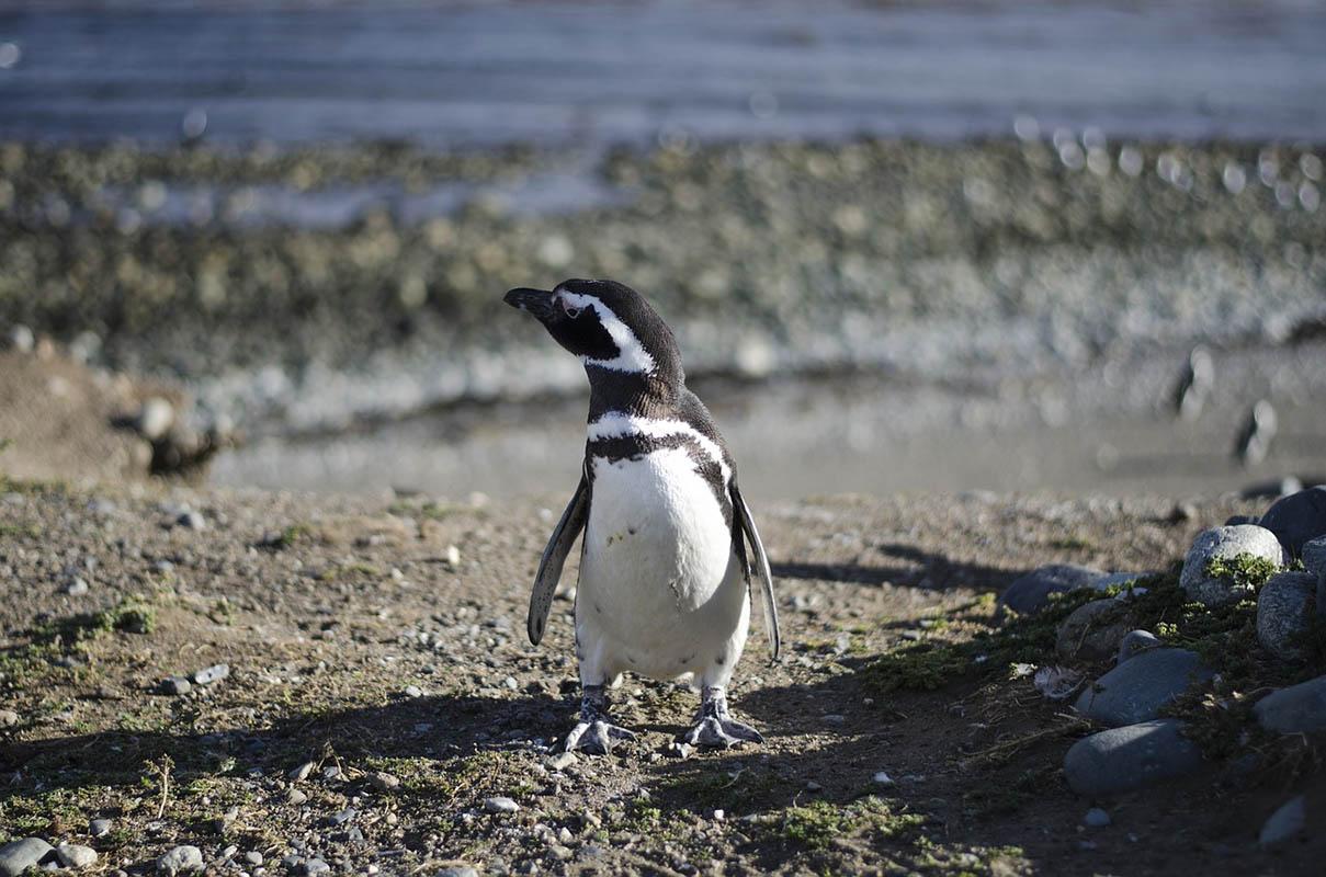Először mértek 20 foknál melegebbet az Antarktiszon