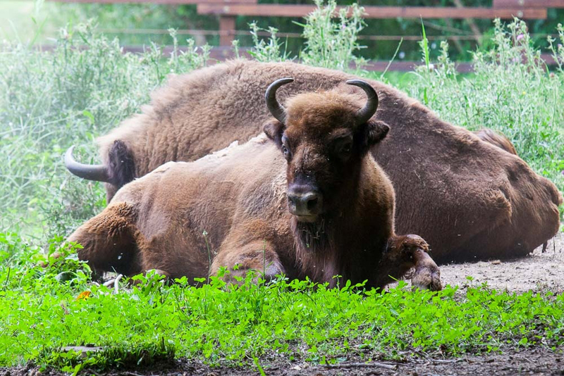 Március 15-én nyit a szarvasi Körösvölgyi Állatpark