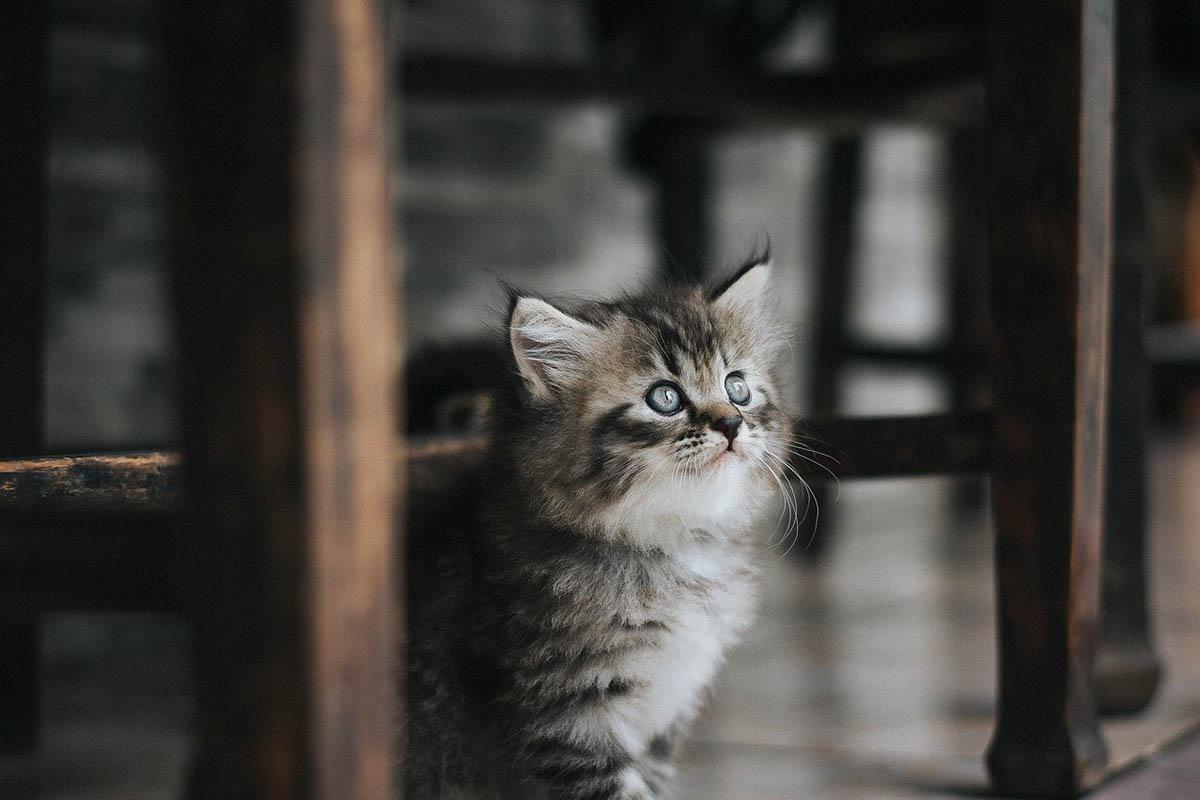 Pozitív lett egy macska koronavírus-tesztje Franciaországban