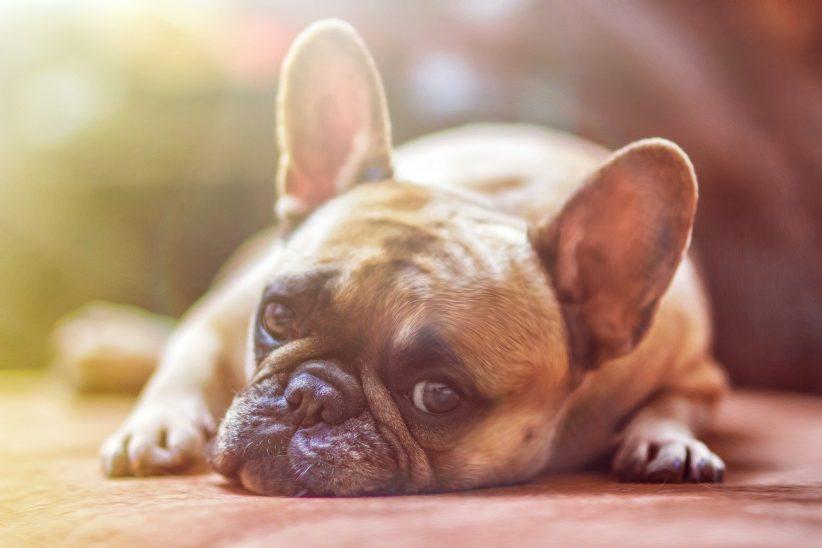 alvó, állatvédelmi