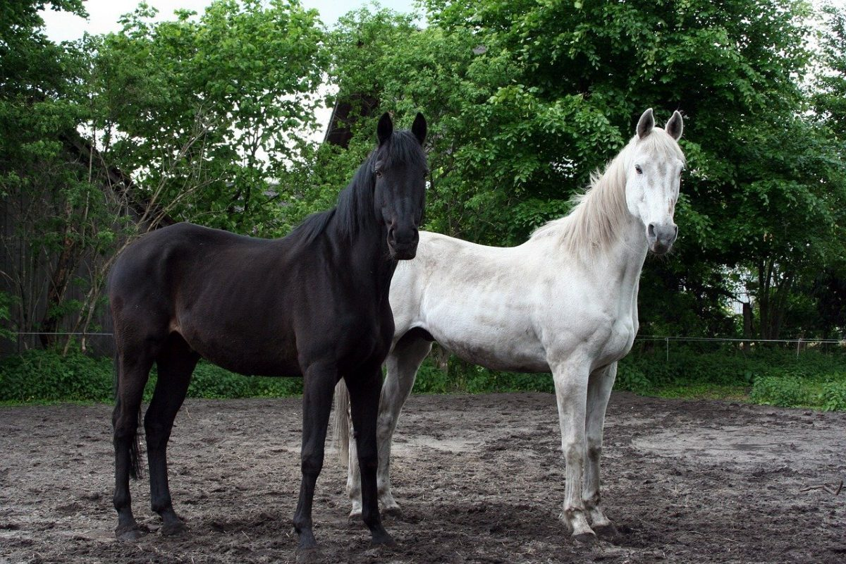 Elkezdődött a lovas fedeztetési idény – mire figyeljen a tenyésztő?