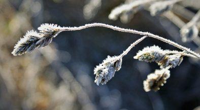 fagy, hideg, tél, fagykár