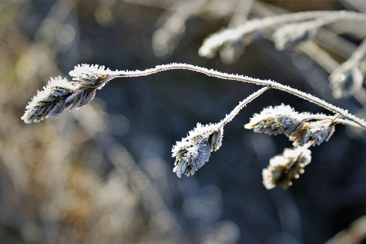 Sarkvidéki eredetű hideg zúdul ránk pénteken