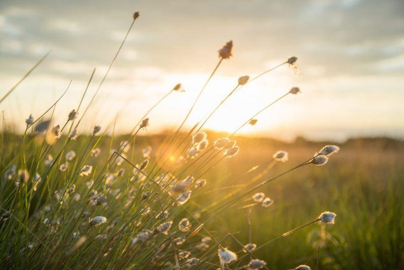 hidegfront, melegebb, szeptemberi, nyári, hétvégén, napsütés, szerdán, Melegszik, hidegfront