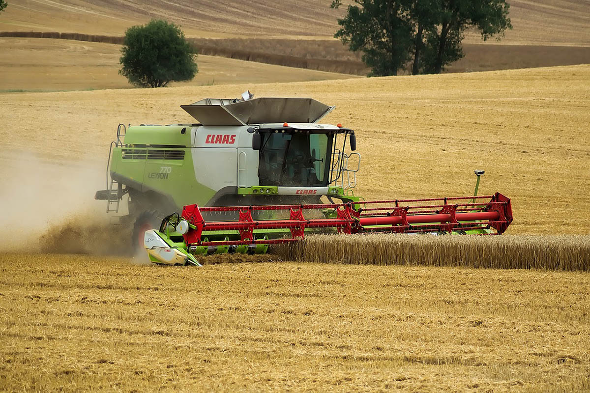 Megkezdődött az aratás, közepesnél gyengébb termés várható