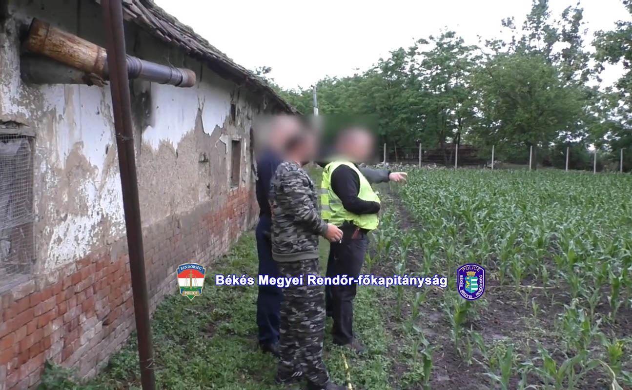Hetven tő kendert foglaltak le a rendőrök egy hunyai tanyán
