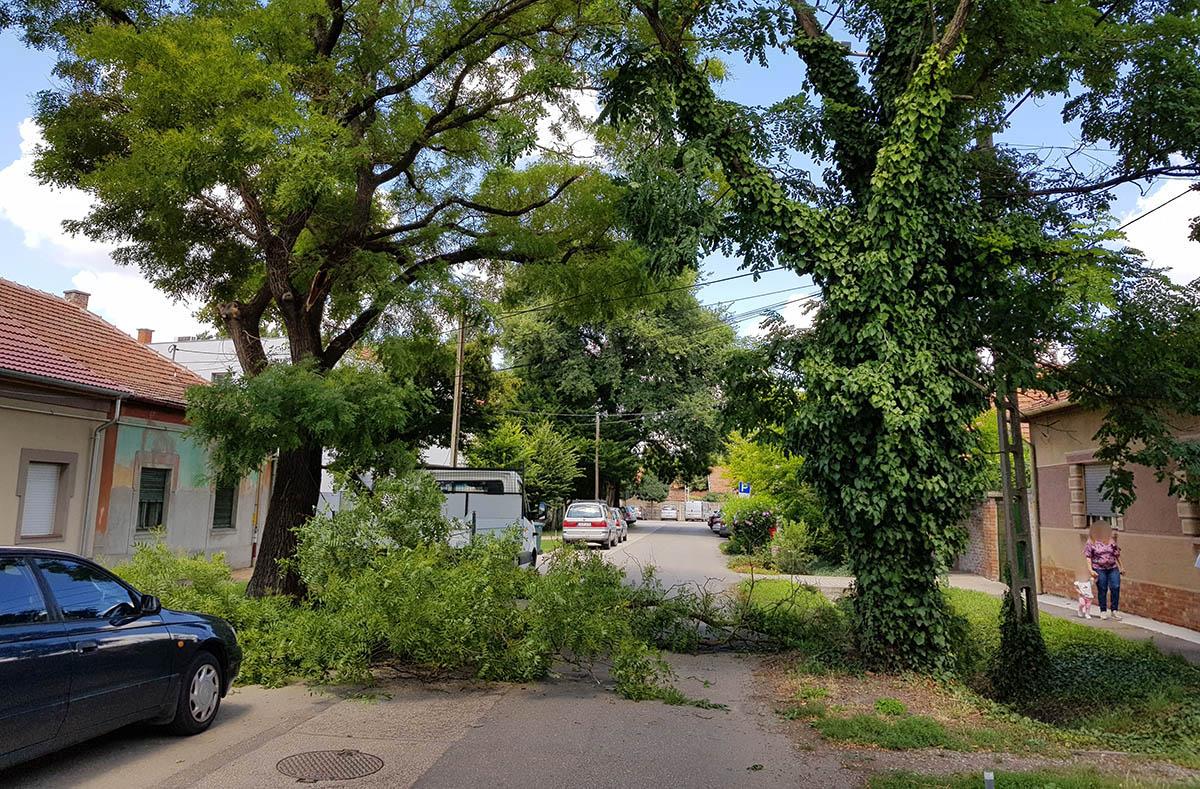 Leszakadt egy faág a Kis-Tabán utcában Békéscsabán