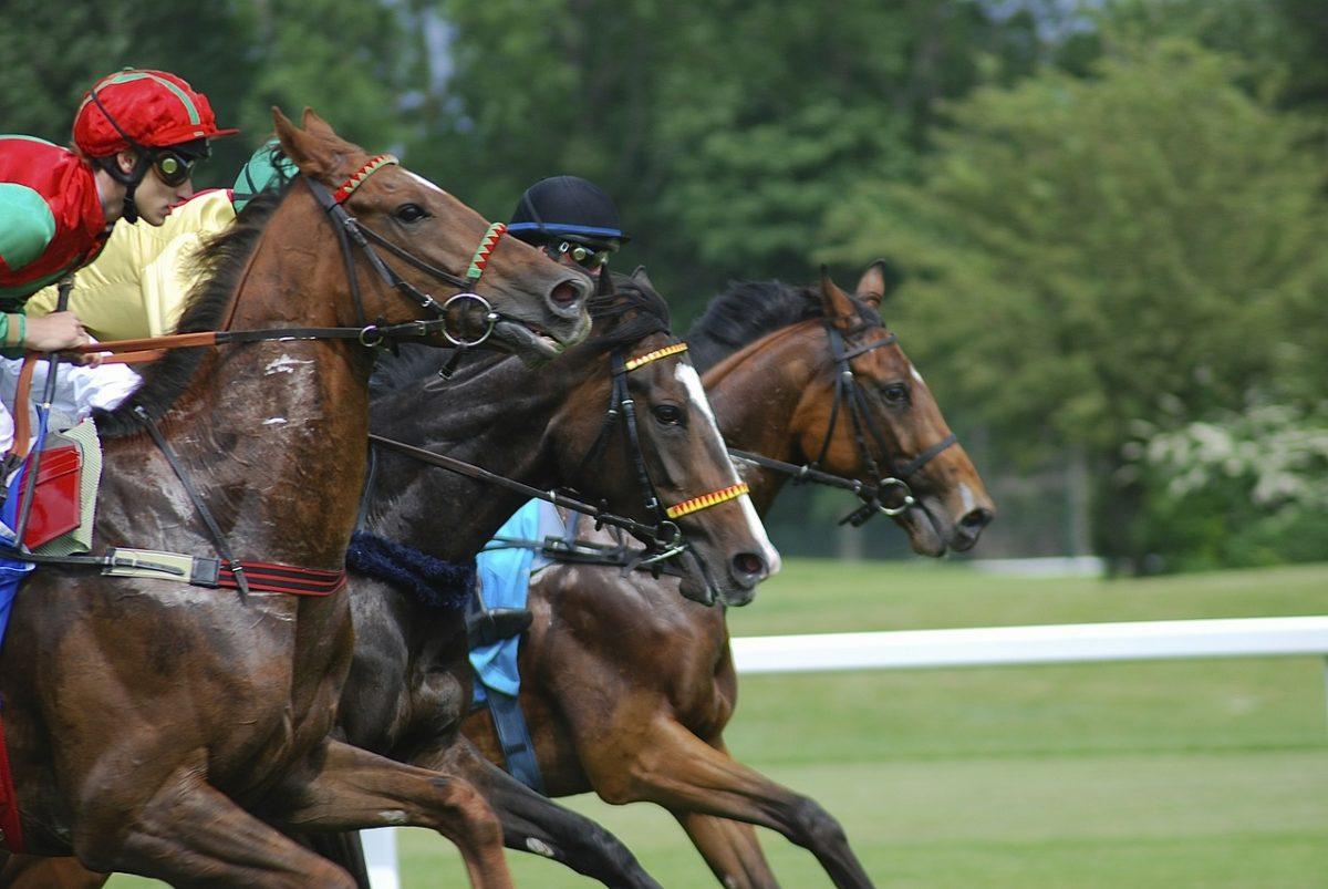 Nemzeti Vágta: Várhatóan 120-130 település lovasa áll majd rajthoz az előfutamokon