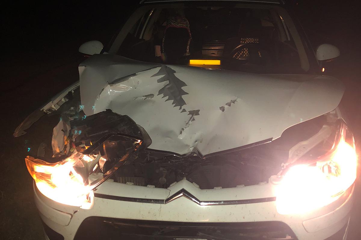 Szarvassal ütközött egy személyautó Kondoros közelében