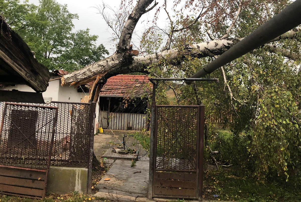 A szeles időjárás miatt, összesen tizenegy esetben vonultak faeltávolításra a megye tűzoltói