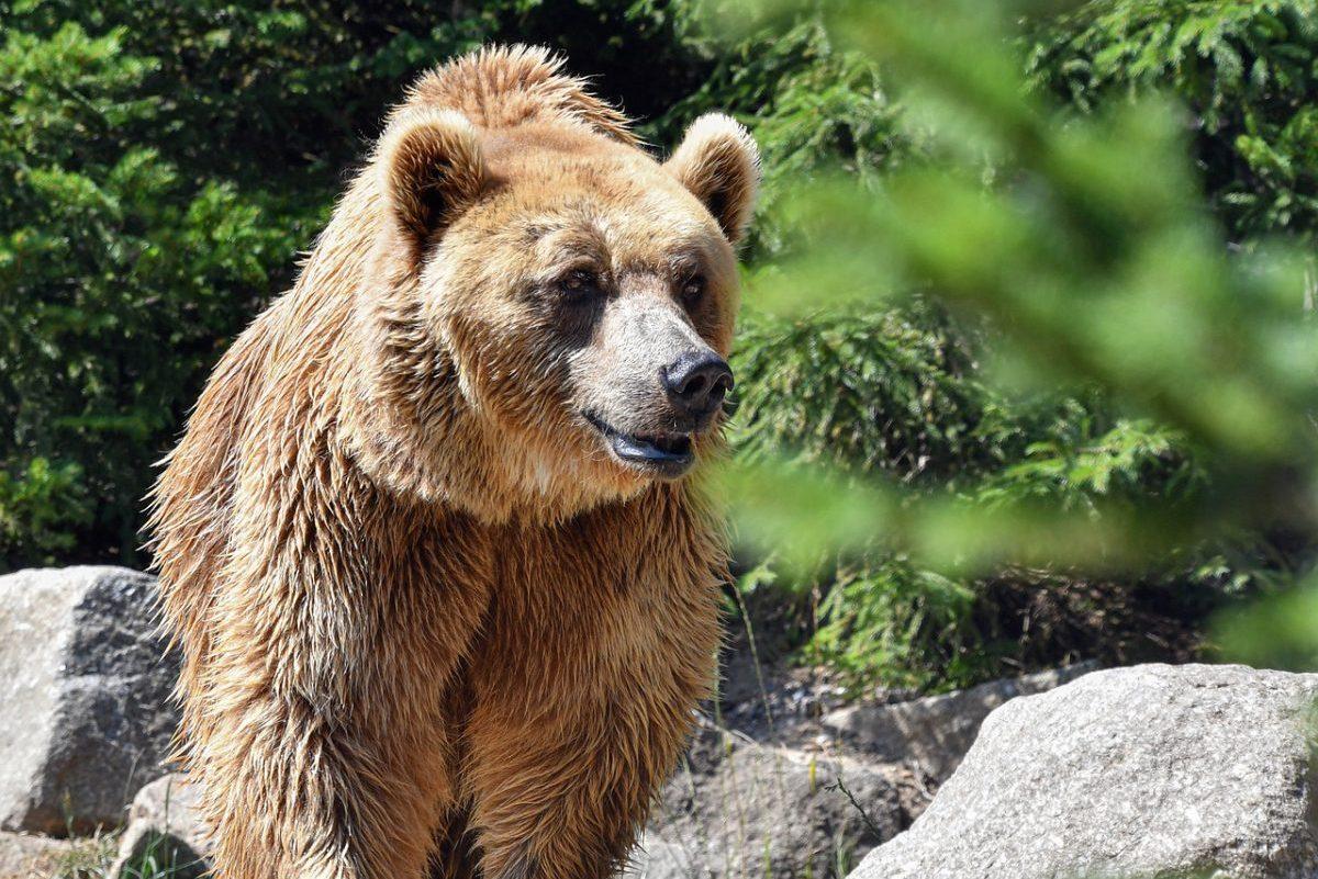 Medvét láttak Miskolcon vasárnap hajnalban