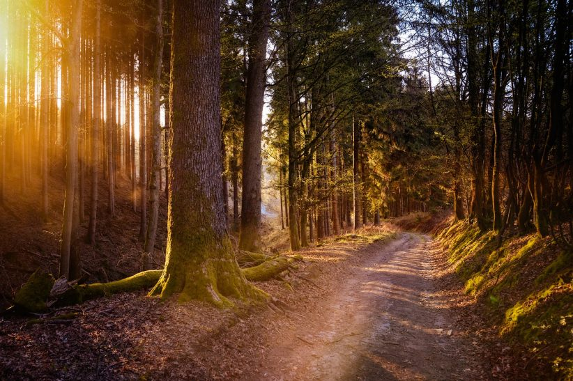 erdőkben