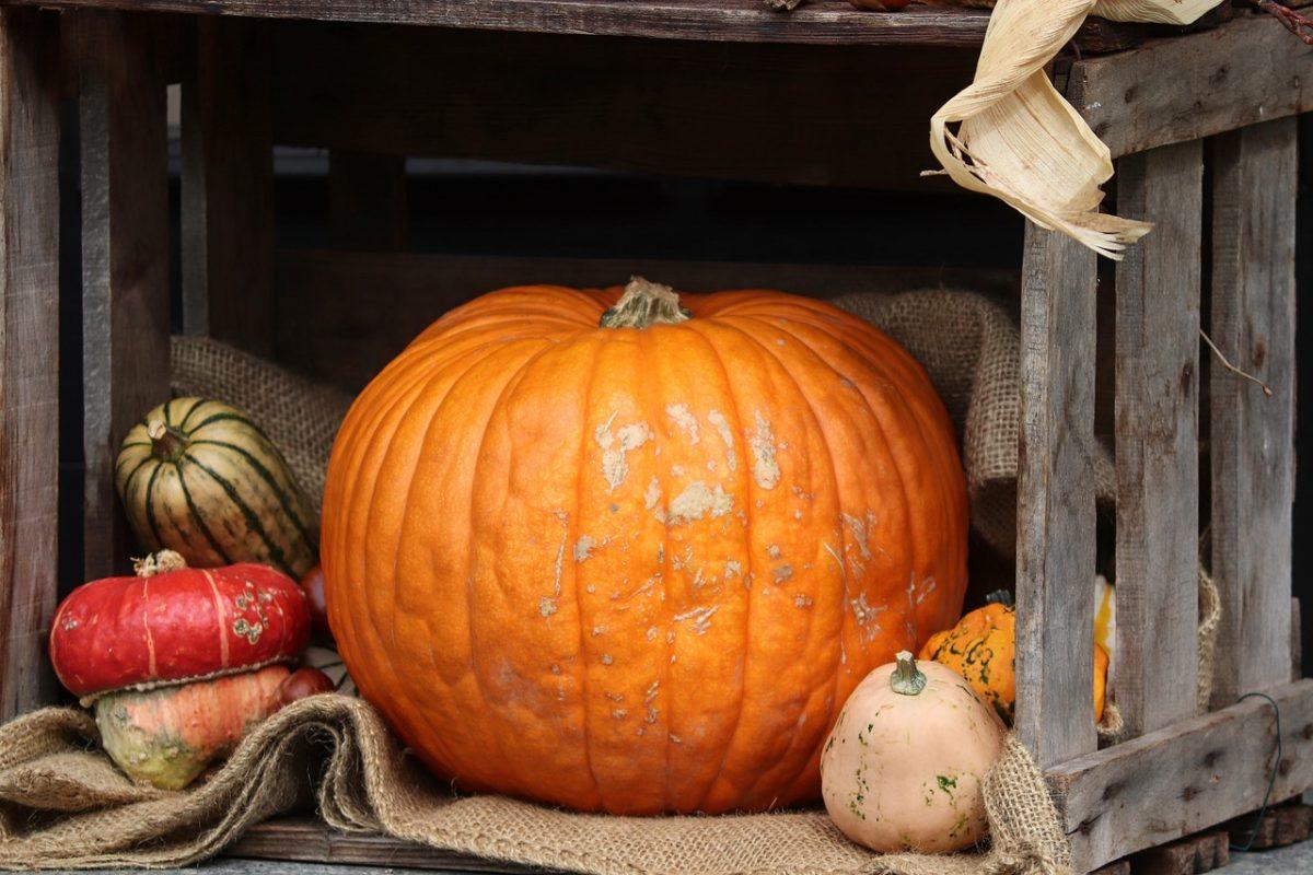 Figyelni kell a Halloween-tökök és a sütőtökök közti különbségre