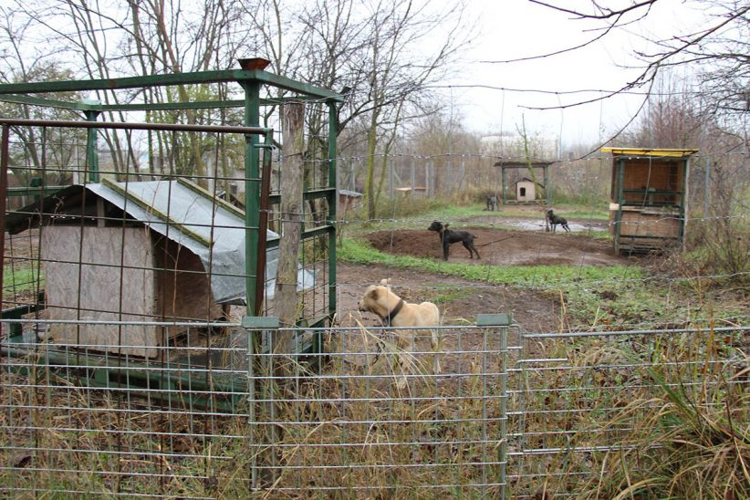 tiltott állatviadal